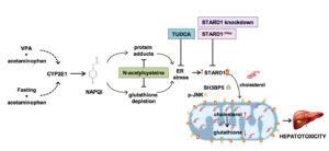 toxicidad-paracetamol
