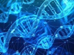 células-ADN-ARN